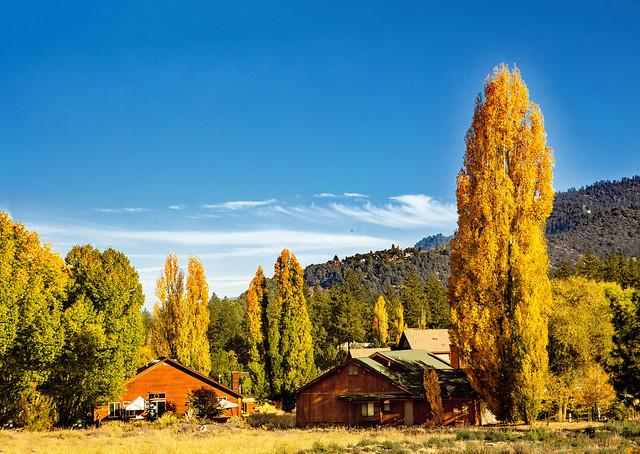 Pine Mountain Club Autumn Colors