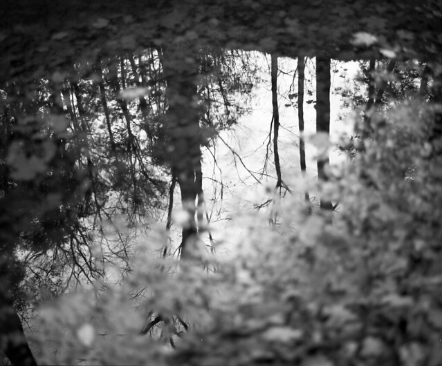 Forest Reflective