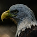 "<p><a href=""https://www.flickr.com/people/154721682@N04/"">Joseph Deems</a> posted a photo:</p>  <p><a href=""https://www.flickr.com/photos/154721682@N04/50733833893/"" title=""Bald Eagle""><img src=""https://live.staticflickr.com/65535/50733833893_2b451bb48c_m.jpg"" width=""240"" height=""200"" alt=""Bald Eagle"" /></a></p>  <p>Fort Worth Zoo</p>"