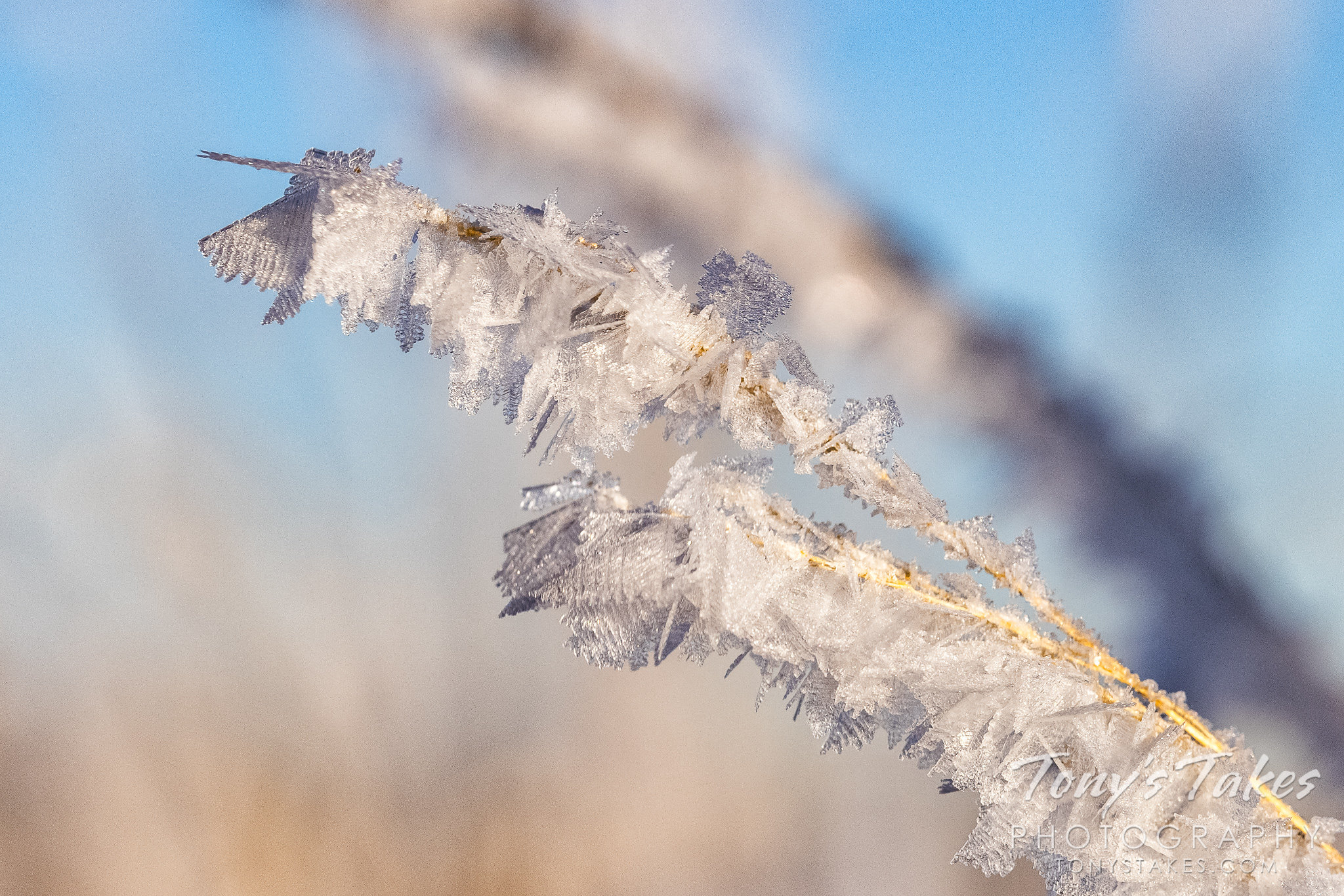 Hoar frost coats the plains