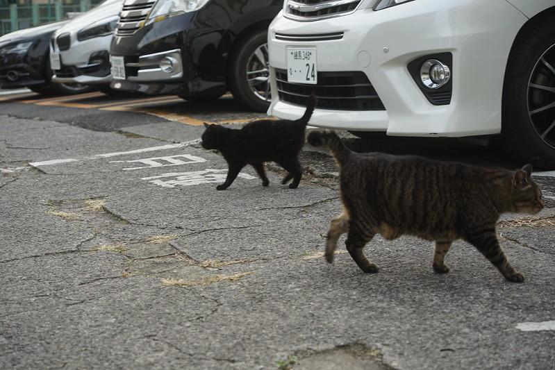 54Sony α7Ⅱ+TAMRON 28 200mm f2 8 5 6 RXD+Black Mistフィルター南池袋中央法律専門学校裏の猫だまり キジ虎 黒