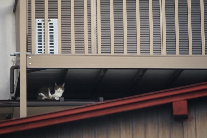 39Sony α7Ⅱ+TAMRON 28 200mm f2 8 5 6 RXD+Black Mistフィルター雑司ヶ谷路地の屋根の上の猫だまり キジ白