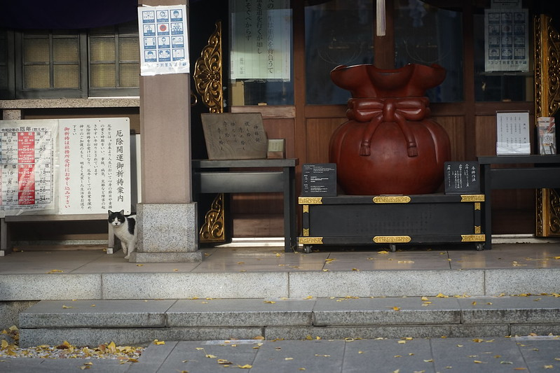 33Sony α7Ⅱ+TAMRON 28 200mm f2 8 5 6 RXD+Black Mistフィルター雑司ヶ谷大鳥神社の猫 黒白