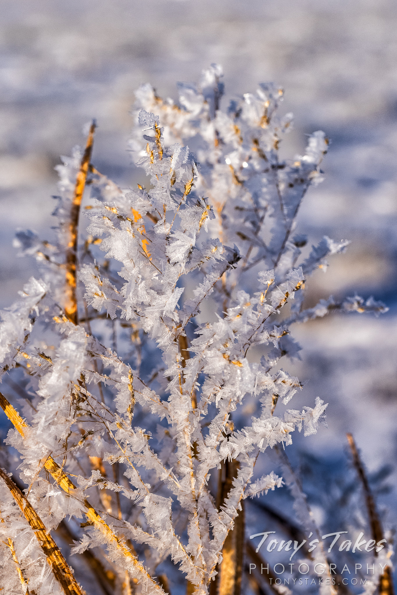 Hoar frost coats the grasses and plants on the Colorado plains. (© Tony's Takes)