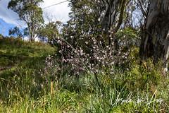 Field of Flowers 3113