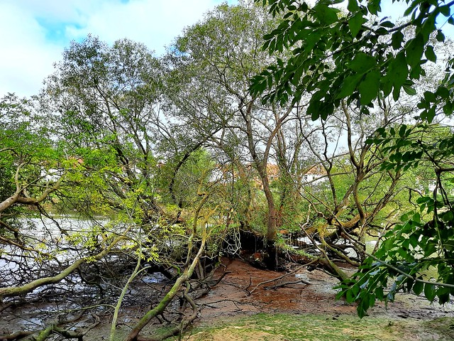 Swaythling Riverside Park