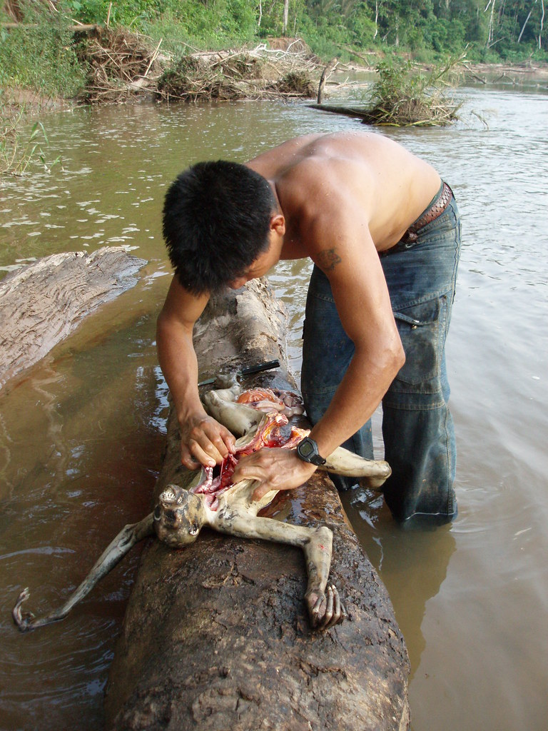 Justino guts the monkey, using a fallen tree as a table, in shallow water to avoid piranhas