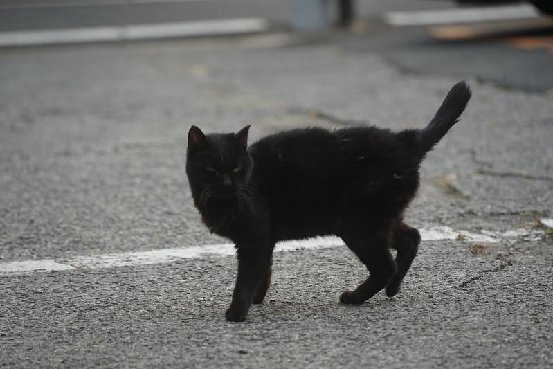 55Sony α7Ⅱ+TAMRON 28 200mm f2 8 5 6 RXD+Black Mistフィルター南池袋中央法律専門学校裏の猫だまり 黒