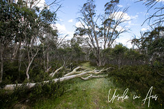 Fallen Tree 3116