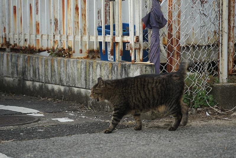 43Sony α7Ⅱ+TAMRON 28 200mm f2 8 5 6 RXD+Black Mistフィルター南池袋中央法律専門学校裏の猫だまり キジ虎