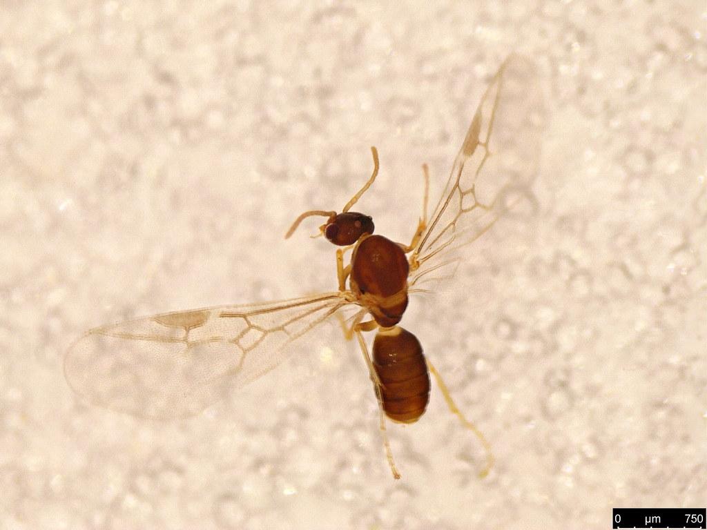 14a - Formicidae sp.