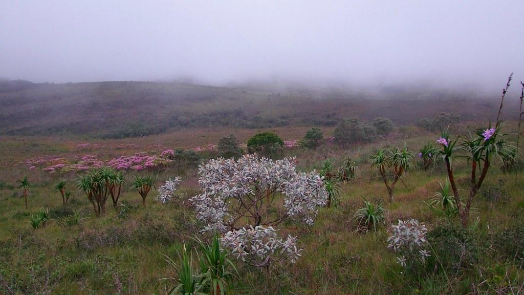 Campos Rupestres - Serra do Cipó