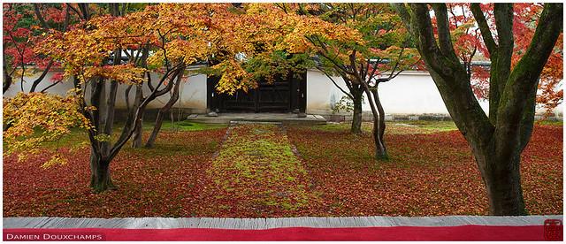 Fallen leaves in Myokakuji temple, Kyoto, Japan