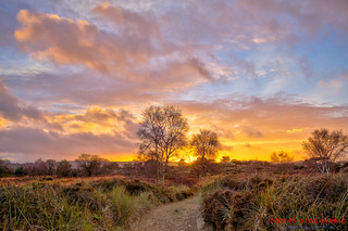 Evening on the Heath | by TDR Photographic