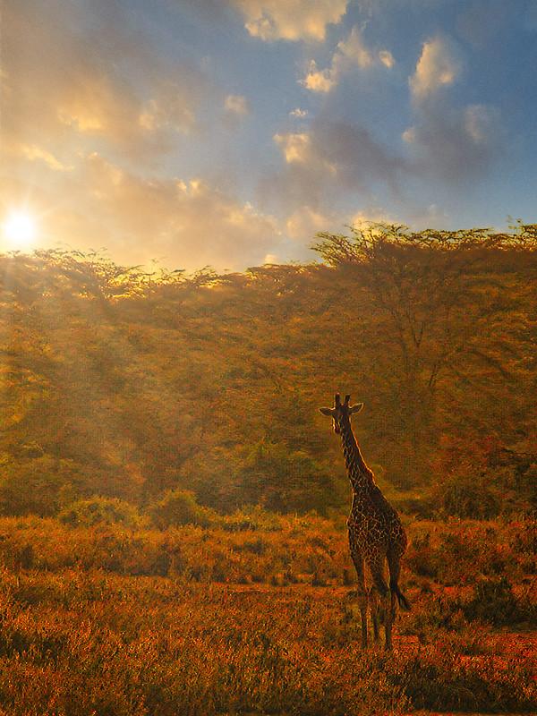 I am a poor lonesome girafe... 50736138953_665812e33c_c