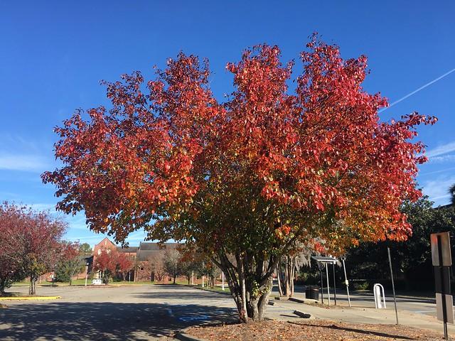 50737099446 aceb1cbb12 z Fall Foliage @ FSU