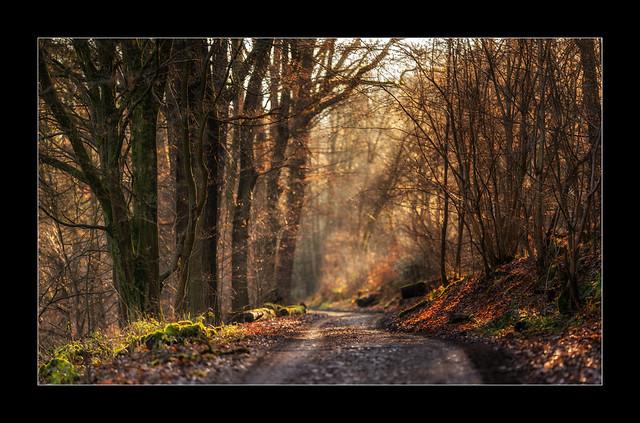 Winterwald (3)