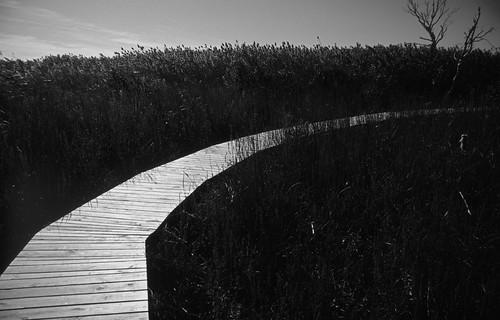 Boardwalk (1)