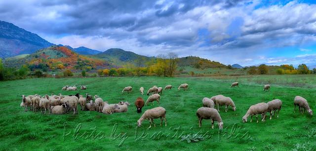 Φθινοπωρινό βοσκοτόπι  Autumnal pasturage
