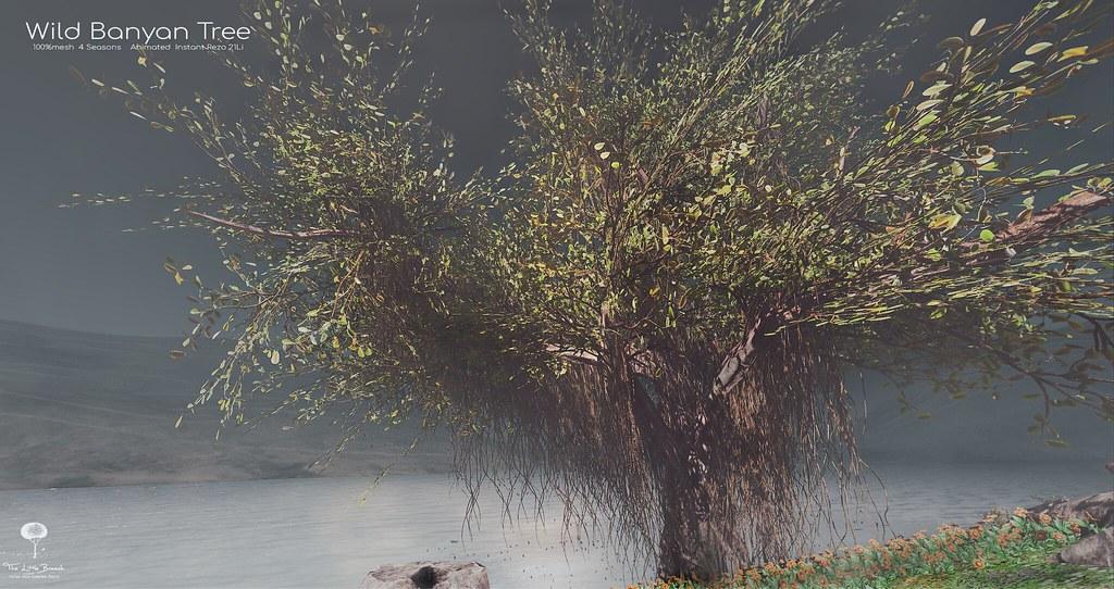 The Little Branch – Wild Banyan Tree – Sense Event