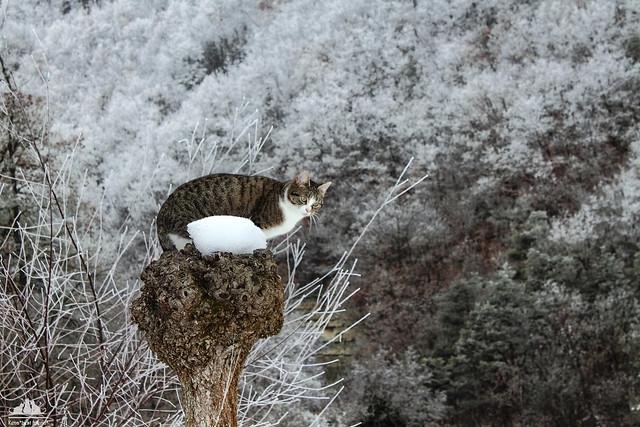 Alice  In The Frozen Woods ❅
