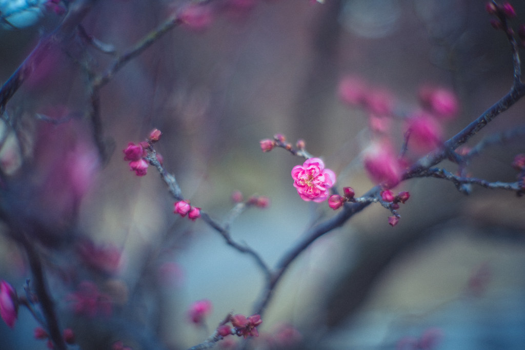 佐布里緑と花のふれあい公園