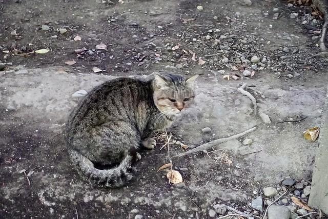 Today's Cat@2020−12−20