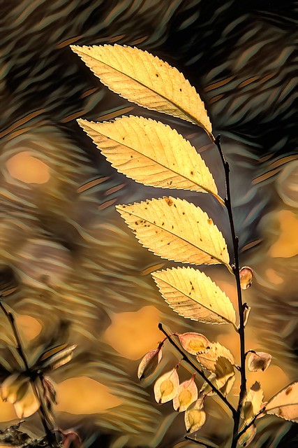 Autumn color - HSS!
