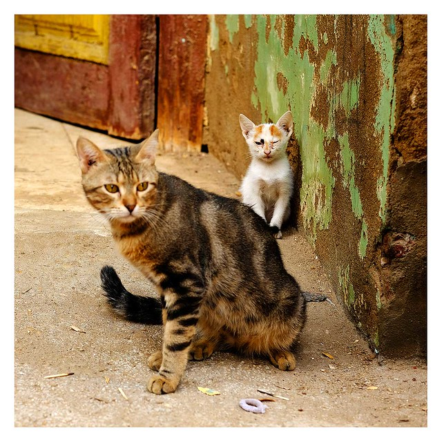 Chats d'Esna (5), protection maternelle