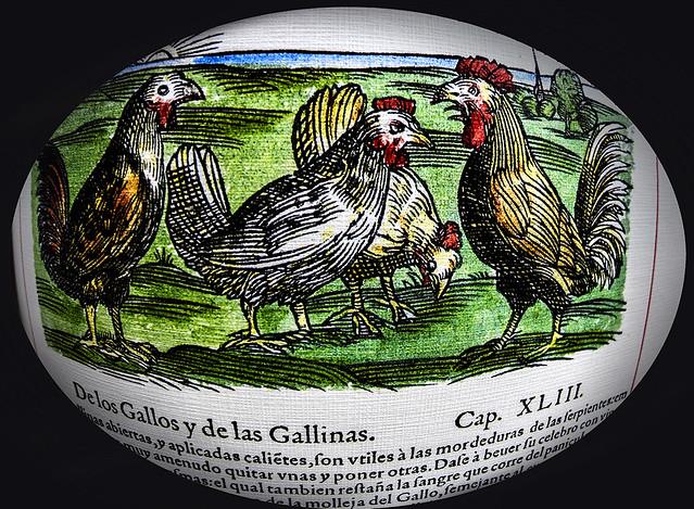 De los gallos y de las gallinas