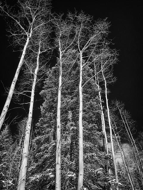 Pine Enclosed