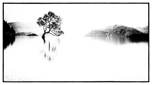 A tree in a lake