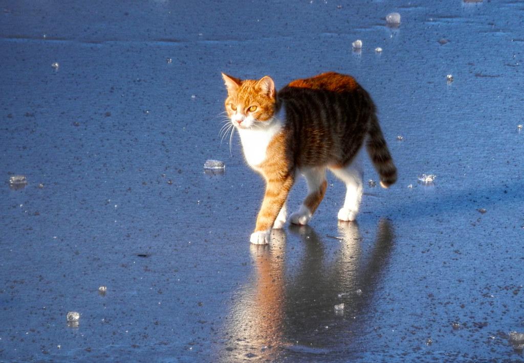 Felix auf dem Eis