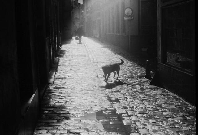dog on sunny street