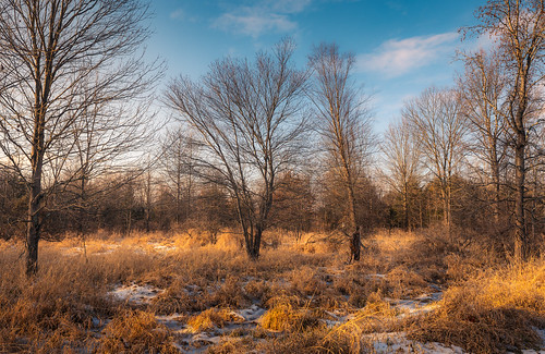 outside outdoors nature park trail hike hiking maryland montgomerycounty moco brookeville md rural woods forest weather winter december cold sunny sunlight goldenhour sunset earlyevening light shadow color bokeh blue sky bluemash preserve wild solitude sony alpha a7riii ilce7rm3 fullframe emount mirrorless sigma lens ultrawide art zoom 1424mmf28dgdn|a