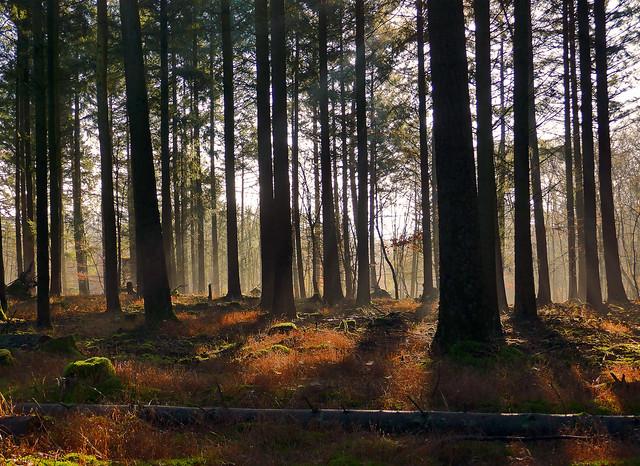 In den Tiefen des Waldes