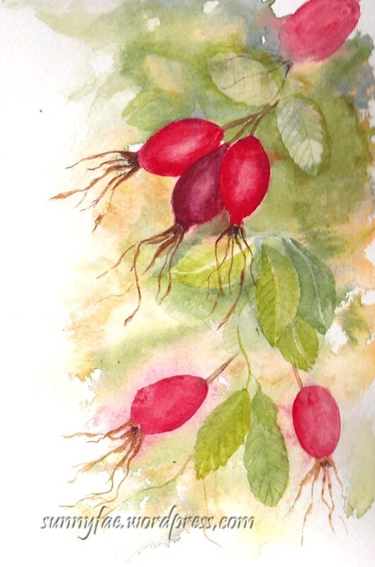 watercolour rose hips