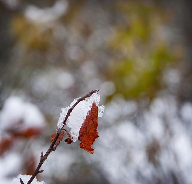 carré d'hiver ;)