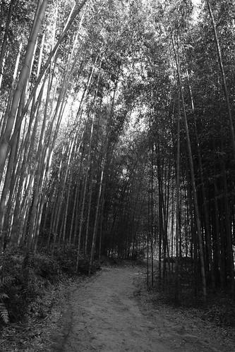 21-12-2020 (5th)(visiting 7Daikaku-ji Temple' from Arashiyama) (24)