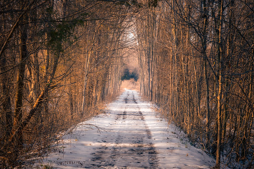 outside outdoors nature park trail hike hiking maryland montgomerycounty moco brookeville md rural woods forest weather winter december cold sunny sunlight goldenhour sunset earlyevening light shadow color bokeh blue sky bluemash preserve wild solitude sony alpha a7riii ilce7rm3 fullframe emount mirrorless sigma lens standardzoom 2470mm 2470mmf28dgdn|a art