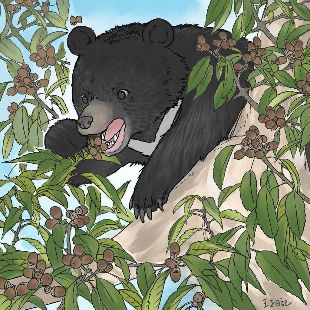 【生物多樣性的美好日常】台灣黑熊小學堂 重返山林的南安小熊