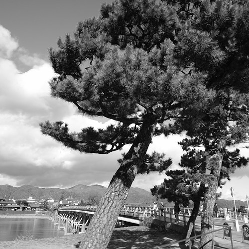 21-12-2020 (5th)(visiting 7Daikaku-ji Temple' from Arashiyama) (4)