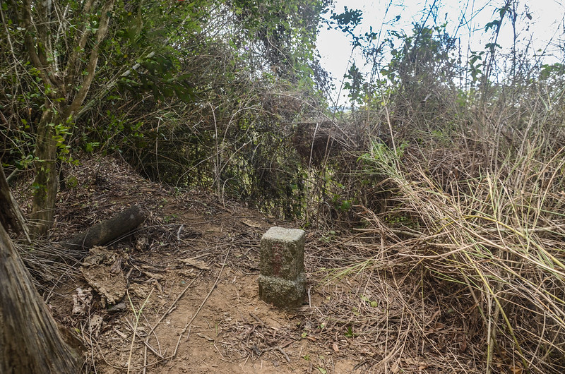 榴子坑山(梯子坑山)冠字野(21)土地調查局圖根點(Elev. 205 m) 2
