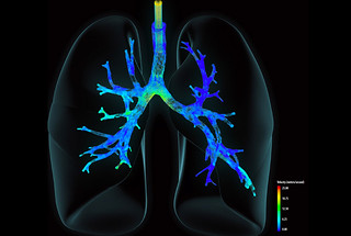 Mathematical visualization shows the velocity of air entering the lungs from a high-frequency pulsating ventilator.