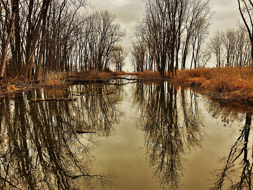 landscape ice thinice reflections trees forest darkclouds overcast nature lakestclair metropark water river creek pond reeds southeastmichigan michigan jannagalski jannagal
