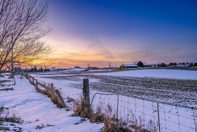 Sunset in farmer field - DSH4684
