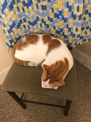 Buttercup my Three Year Old Child sleeping on his Corner Chair - Thursday, December 17, 2020