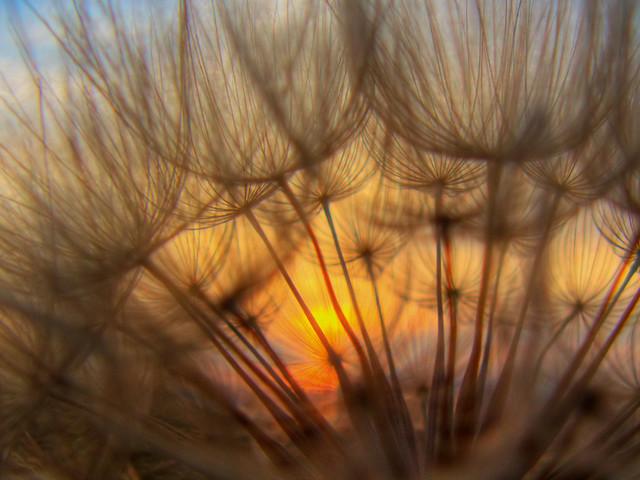 Nature Filter