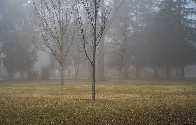 Morning Fog at the Park - Amazing Fog Series No. 4