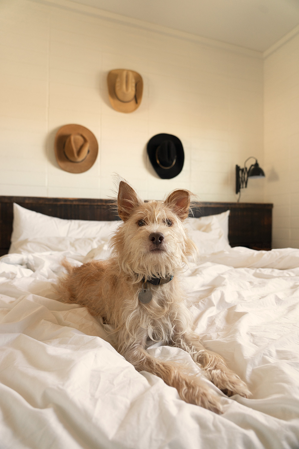 10newcuyama-california-roadtrip-travel-dog